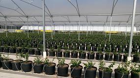 Foto de Projar aumenta la producción de frutos rojos con el sistema hidropónico