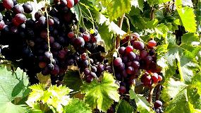 Foto de Abierto el plazo para contratar el seguro de uva de vino