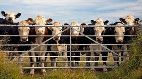 Fotografia de Los animales sanos son la clave para garantizar la sostenibilidad ganadera