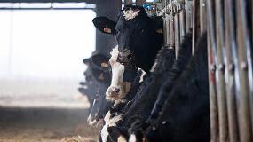 Foto de El IRTA participa en un proyecto europeo sobre tecnología de precisión y uso de datos en ganadería de leche