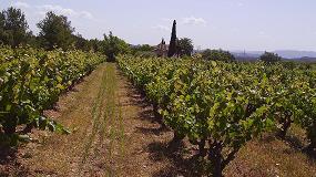 Foto de Los vinos DO Bierzo incrementan su comercialización un 25% en la campaña 2014/15