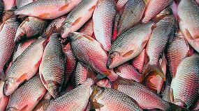 Picture of Recubrimientos comestibles para pescado, barrera contra bacterias
