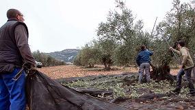 Foto de Cooperativas Agro-alimentarias prevé una campaña de producción de aceite entre 85.000 y 95.000 toneladas en Castilla-La Mancha