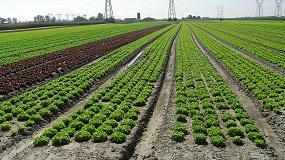 Picture of Uso de hongos micorrícicos y bacterias beneficiosas del suelo como biofertilizantes en cultivos hortícolas