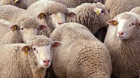 Picture of Caen los ingresos de los ganaderos de leche de ovino