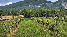 Picture of El Gobierno actualiza la norma de aplicación del Programa de ayuda al sector vitivinícola español 2014-2018