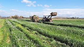 Foto de Raigrás, colza forrajera y avena como cultivos captadores de nitratos y para biogás