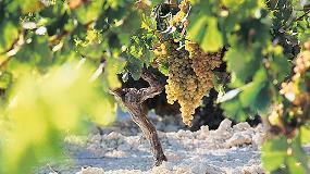 Foto de CECRV considera un error grave el impuesto a productos vitivinícolas intermedios