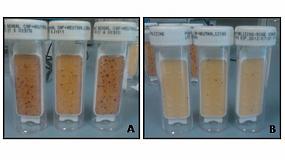 Foto de Nuevas soluciones para evitar el crecimiento bacteriano en gasóleos