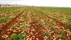 Foto de Brotone contribuye a aumentar la producción y la rentabilidad del cultivo de patata