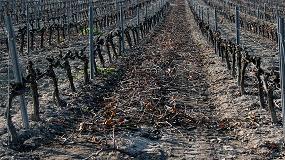 Foto de Madera de poda como alternativa al anhídrido sulfuroso en la elaboración de vinos tintos
