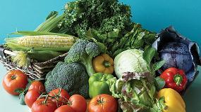 Foto de Se reduce la oferta de hortalizas en Europa y España se confirma como el proveedor más fiable en mitad de la crisis