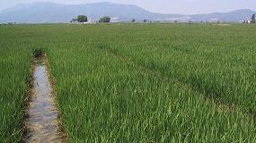 Foto de Ayudas y requerimientos del cultivo del arroz, eje central de una nueva jornada organizada por el IRTA