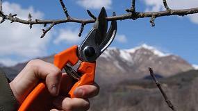 Foto de El IRTA organiza la VI jornada de poda en manzana y pera de montaña
