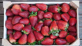Picture of Ventajas de la utilización de atmósferas con altos niveles de CO2 en la calidad de frutos