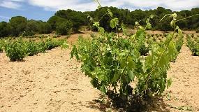 Foto de Globalviti: estudiar los efectos del cambio climático en el viñedo para mejorar la producción
