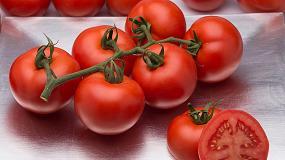 Foto de Syngenta presenta su nuevo tomate rama Versalles