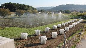 Picture of ¿Se comunican las plantas de brásicas para defenderse de las plagas de insectos herbívoros?