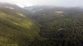 Foto de Asforcan y Cose explican en un vídeo los beneficios de la gestión forestal sostenible