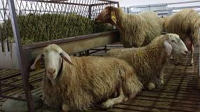 Foto de En busca de una leche de oveja más saludable y rentable para el ganadero