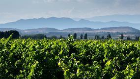 Foto de Cérvoles Celler celebra 20 años de historia elaborando vinos de finca