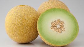 Foto de Con Readygal F1, la marca Nunhems dirige hacia Almería la demanda de melón Galia con calidad y sabor