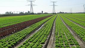 Foto de La exportación de frutas y hortalizas frescas en el primer trimestre crece un 11% en valor y retrocede un 2% en volumen