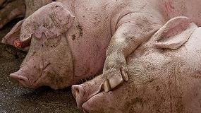 Foto de Diseñan un sistema para monitorizar en tiempo real la salud animal