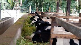 Picture of La primera pezonera antibacteriana para vacas del mundo