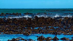 Foto de Basfoliar Kelp Bio, una mezcla líquida de micronutrientes
