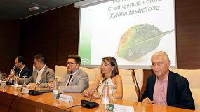 Foto de Andalucía activa un teléfono de atención contra la Xylella