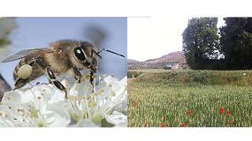 Foto de La conservación de los polinizadores logra beneficios con los márgenes de cultivo