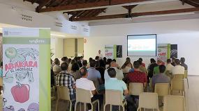 Foto de Syngenta pone todo su potencial innovador en el desarrollo de variedades de pimiento resistentes