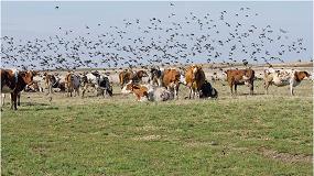 Foto de BirdGard Iberia ayuda a proteger las granjas de los efectos nocivos de los pájaros