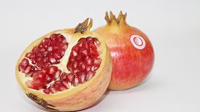 Foto de Investigación aplicada en patología de poscosecha de fruta fresca en el Centre de Tecnologia Postcollita (CTP) del Institut Valencià d'Investigacions Agràries (IVIA)