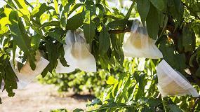 Picture of Calidad poscosecha de la producción hortofrutícola en Aragón: Grupo de Investigación en Alimentos de Origen Vegetal