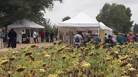 Foto de Syngenta muestra el potencial de sus variedades de girasol SY Kiara y Suzuka HTS para las zonas Centro-Norte y Ebro de España