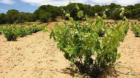 Foto de Nueva clasificación para distinguir a las denominaciones de origen vinícolas