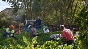 Foto de Más de 9 millones de kg de uva en la DO Bierzo