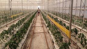 Picture of Las trampas para control biológico de Greenvass combaten las nuevas plagas que dañan los cultivos