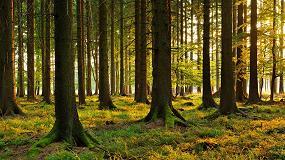 Foto de Asegurar el origen legal de la madera