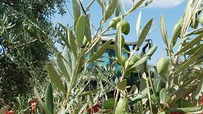Foto de EE UU habla de competencia desleal para imponer un arancel a la importación de aceitunas españolas