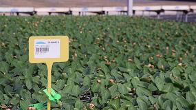 Foto de Cristalplant abre en ecológico con el sello GlobalG.A.P. y CAAE