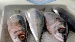 Foto de Hielo ozonizado en escamas para conservar productos del mar