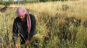 Foto de Proyecto para estudiar la exposición de los cereales a condiciones climáticas cambiantes