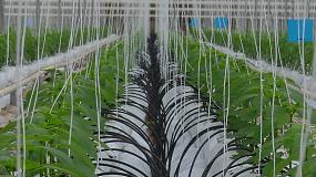 Foto de El cultivo en invernadero: sostenible y transformador del territorio