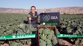 Foto de Gea, la nueva apuesta de Sakata Seed Ibérica en brócoli