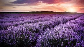 Foto de El color violeta de la colección Juntas Coloreadas de Mapei, tendencia en 2018