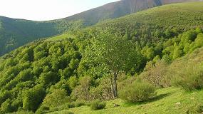 Foto de Cose informará en Maderalia sobre fiscalidad y medidas para la dinamización de la gestión del monte
