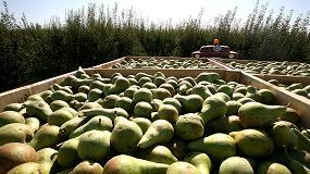 Foto de REPEAR: Desarrollo de una nueva solución natural y sostenible para el tratamiento post-cosecha de pera